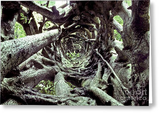 Strangler Fig Greeting Cards - Hollow Trunk Of Strangler Fig Greeting Card by Greg Dimijian
