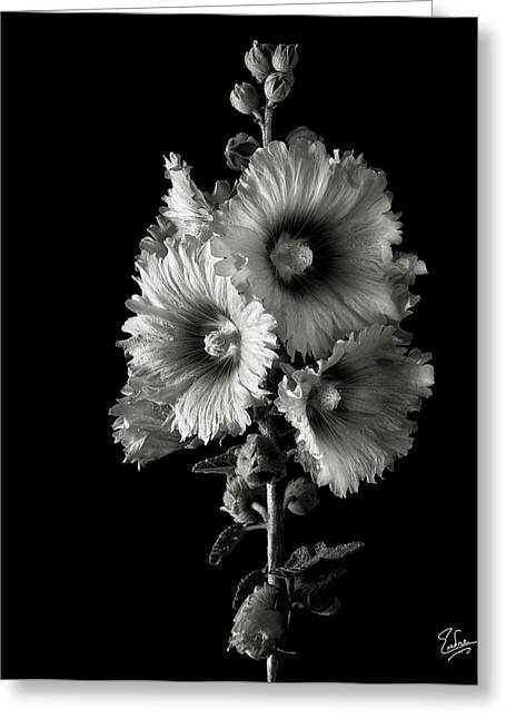 Flower Photos Greeting Cards - Hollyhock in Black and White Greeting Card by Endre Balogh