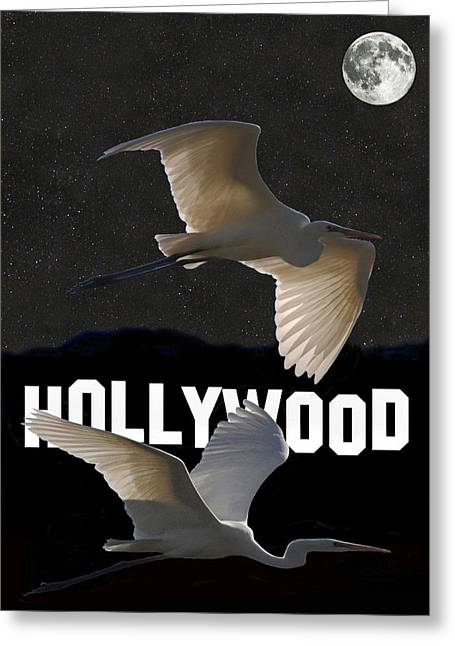 Acroplolis Greeting Cards - Hollywood Birds Great Egrets  Greeting Card by Eric Kempson