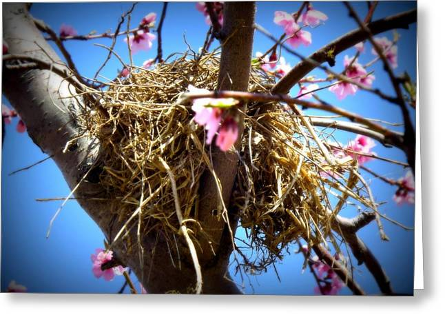 Mud Nest Greeting Cards - Home Greeting Card by Shelley Blair