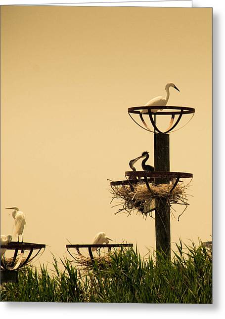 Longneck Greeting Cards - Home Sweet Home Greeting Card by Trish Tritz