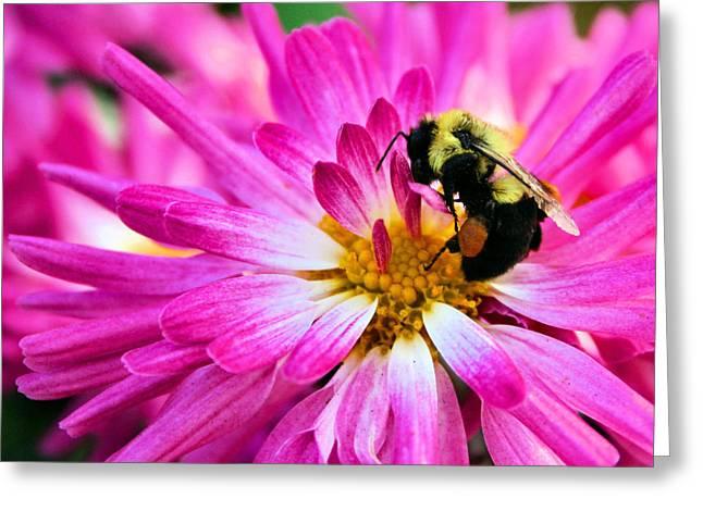 Sacral Greeting Cards - Honey Sacs Greeting Card by Kristin Elmquist