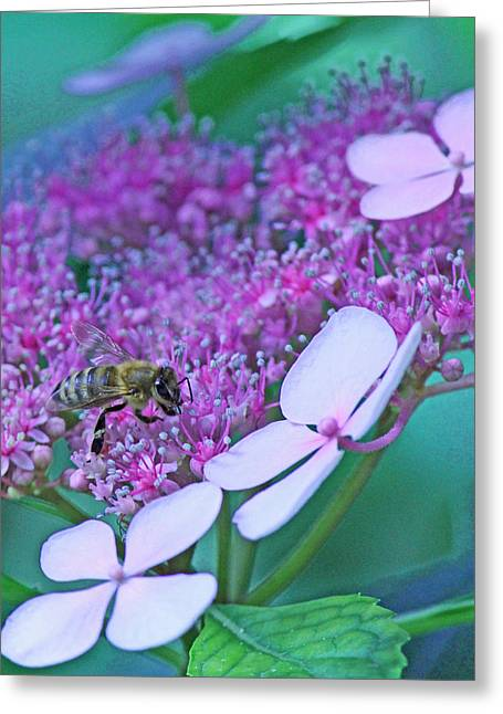 Becky Greeting Cards - Honeybee on pink lace Greeting Card by Becky Lodes