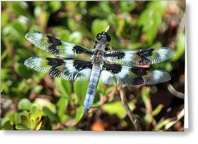 Honeyman Park Dragonfly Greeting Card by Chris Anderson