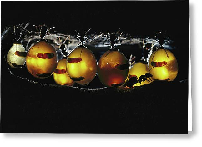 Ai Greeting Cards - Honeypot Ant Camponotus Inflatus Greeting Card by Mike Gillam