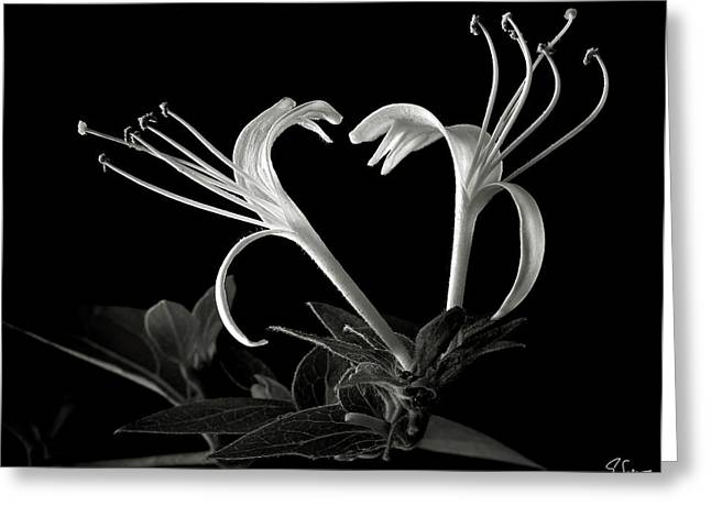 Flower Photos Greeting Cards - Honeysuckle in black and White Greeting Card by Endre Balogh