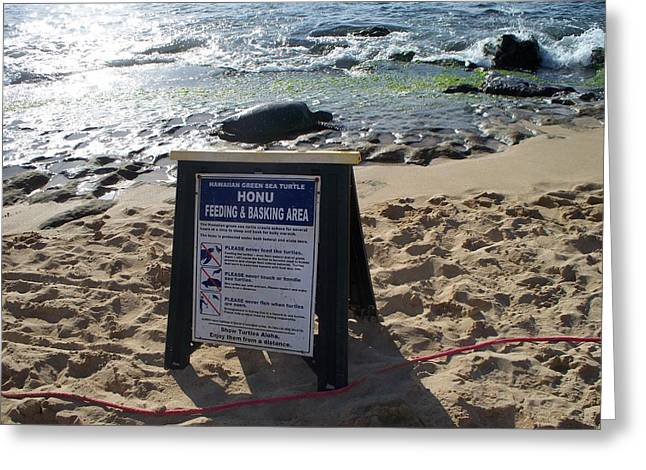 Laniakea Beach Greeting Cards - Honu Feeding and Basking Greeting Card by Grant Wiscour