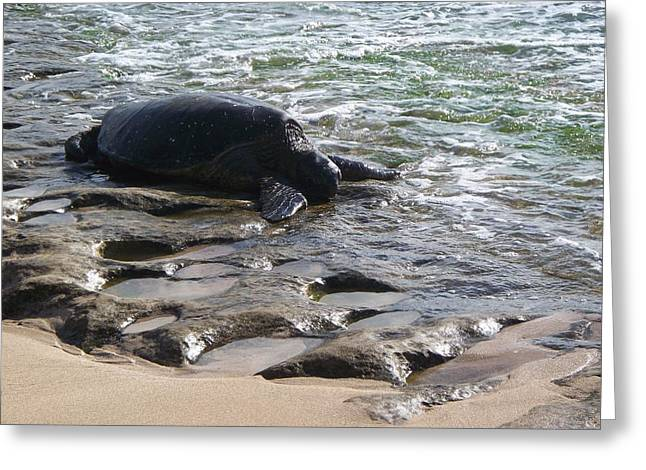 Laniakea Beach Greeting Cards - Honu in Lanikea Surf Greeting Card by Grant Wiscour