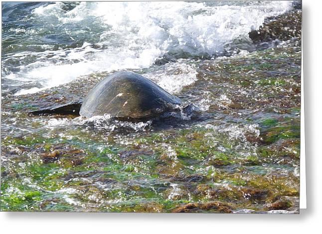 Laniakea Beach Greeting Cards - Honu Waverider Greeting Card by Grant Wiscour