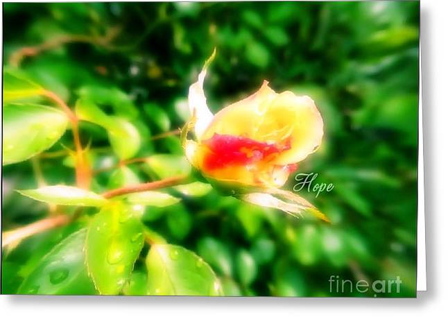 Empowerment Greeting Cards - Hope Greeting Card by Amy Delaine
