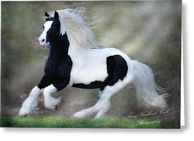 Gypsy Horse Greeting Cards - Hope and Glory Greeting Card by Terry Kirkland Cook