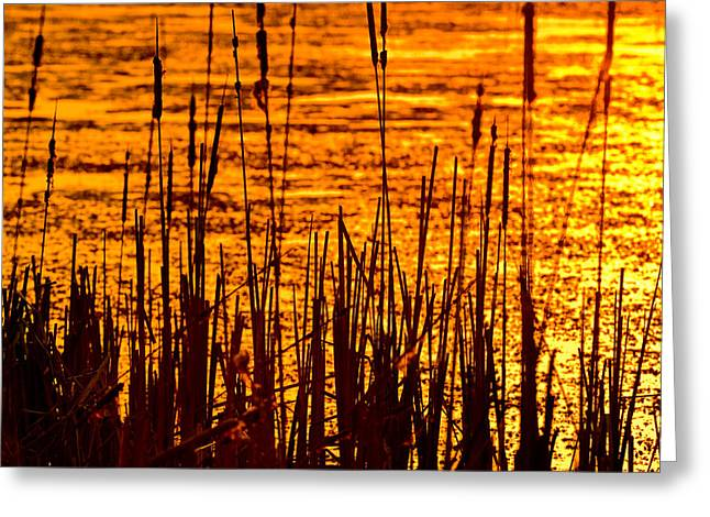 Willow Lake Greeting Cards - Horicon Cattail Marsh Wisconsin Greeting Card by Steve Gadomski