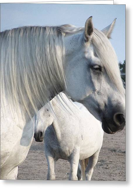 Horse-15 Greeting Card by Todd Sherlock