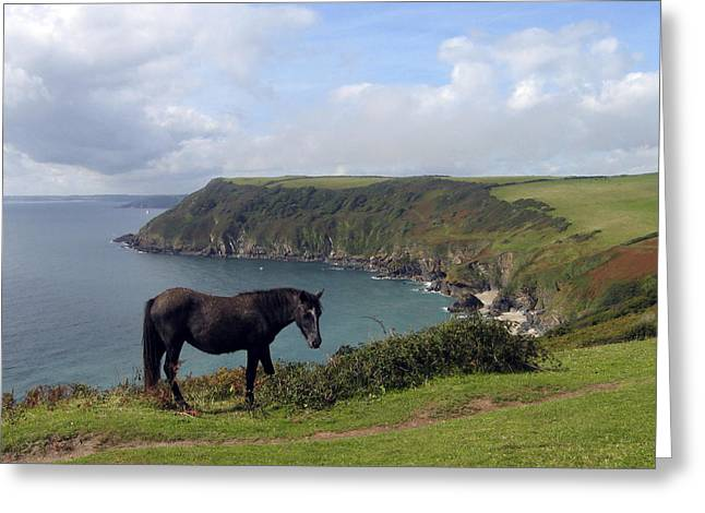 Seascape Greeting Cards - Horse along Coastal Path Cornwall Greeting Card by Kurt Van Wagner