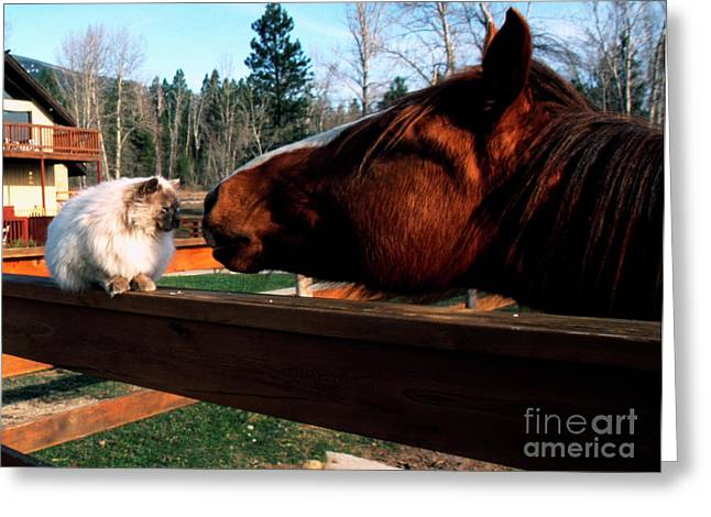 Rubbing Greeting Cards - Horse and Cat Nuzzle Greeting Card by Thomas R Fletcher