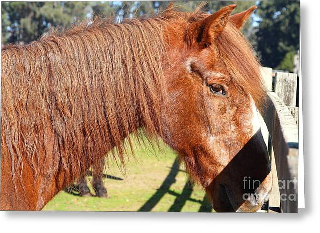 Marin County Greeting Cards - Horse At The Ranch . 7D9756 Greeting Card by Wingsdomain Art and Photography