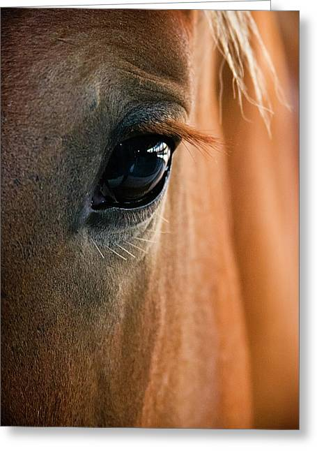 Farm Horse Greeting Cards - Horse Eye Greeting Card by Adam Romanowicz