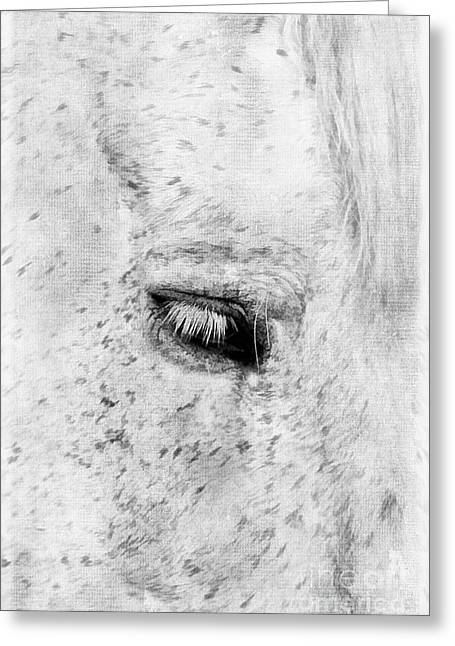 Kentucky Horse Park Photographs Greeting Cards - Horse Eye Greeting Card by Darren Fisher