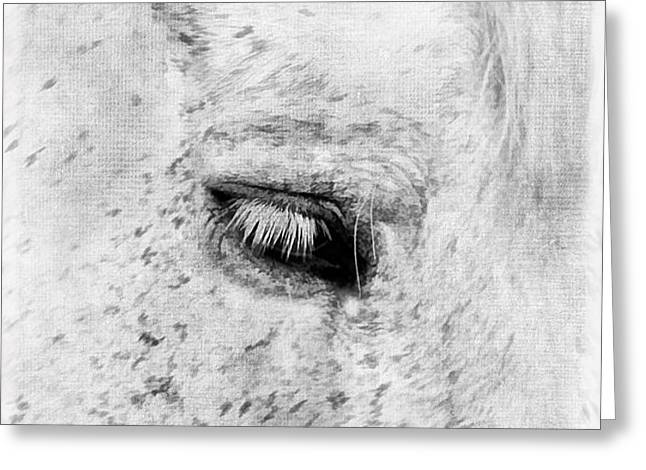 Horse Eye Greeting Card by Darren Fisher