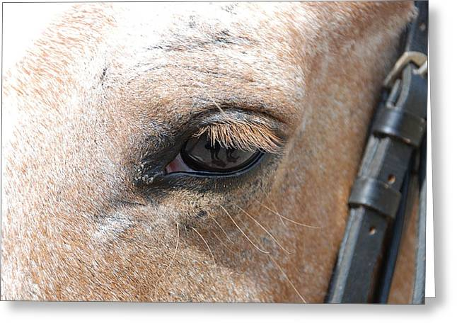 Horseback Photographs Greeting Cards - Horse Eye Greeting Card by Jennifer Lyon