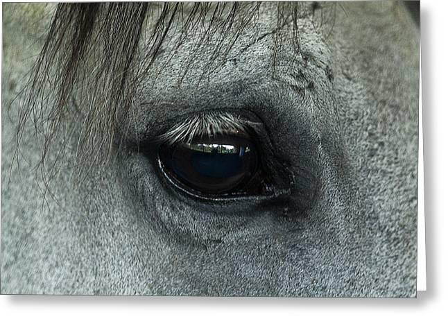 Race Horse Greeting Cards - Horse Eye Greeting Card by John Greim