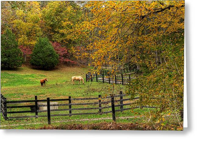 Horse Images Greeting Cards - Horse Farm Greeting Card by Todd Hostetter
