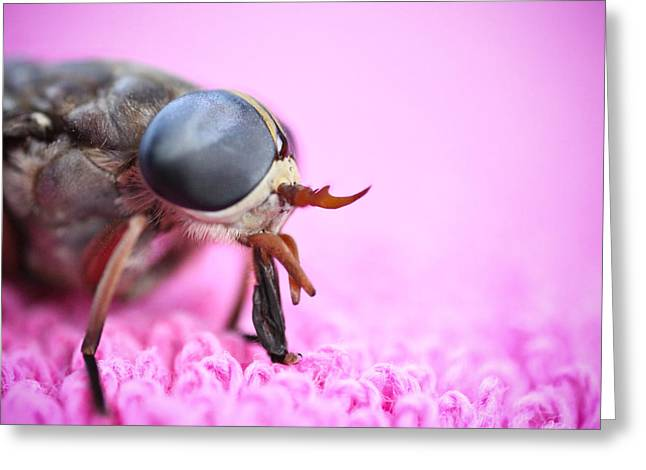 Ryan Kelly Greeting Cards - Horse Fly Greeting Card by Ryan Kelly