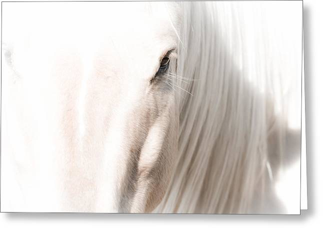 Horse Glow Greeting Card by Toni Thomas