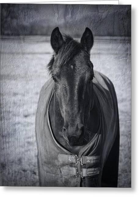Pajamas Greeting Cards - Horse Grunge Greeting Card by Kathy Clark