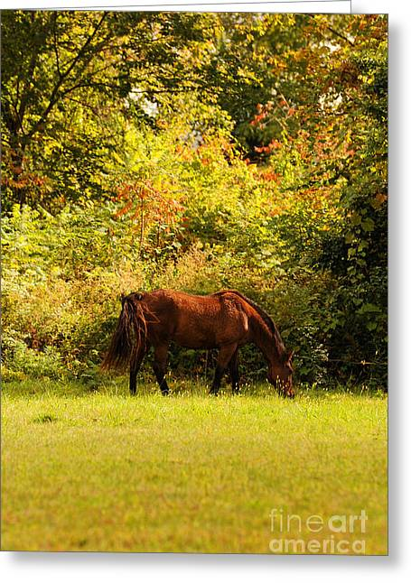 Sunlit Greeting Cards - Horse Greeting Card by HD Connelly