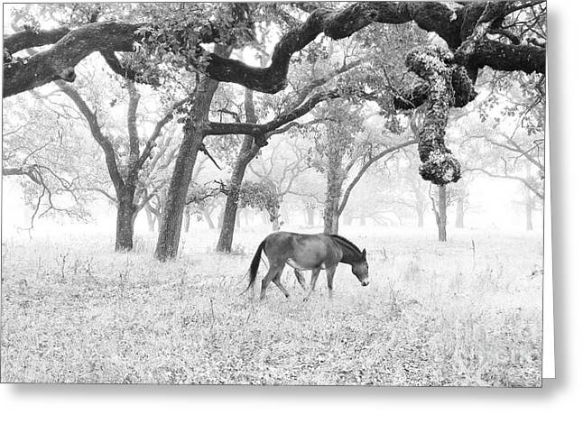 Cmlbrown Greeting Cards - Horse In Foggy Field Of Oaks Greeting Card by CML Brown