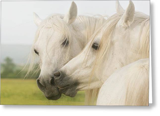 Horse Kiss Greeting Card by El Luwanaya Arabians