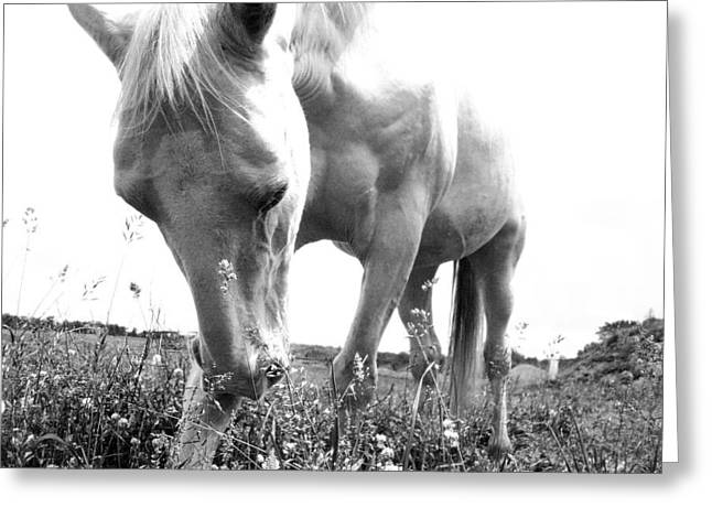 Horses Pyrography Greeting Cards - Horse Greeting Card by Mia W