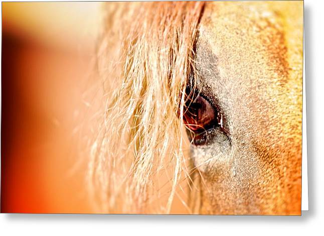Horse In Field Greeting Cards - Horse Moves 9 Greeting Card by Nathan Larson