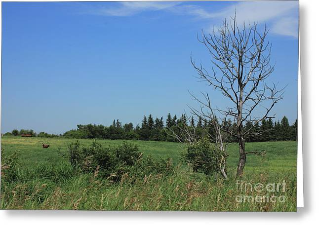Alberta Greeting Cards - Horse pasture on the plains Greeting Card by Jim Sauchyn