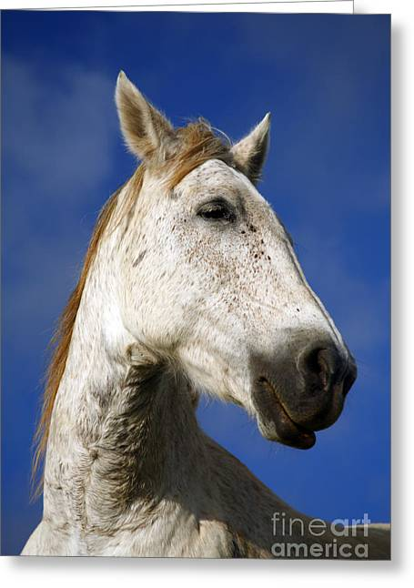 Farm Horse Greeting Cards - Horse portrait Greeting Card by Gaspar Avila