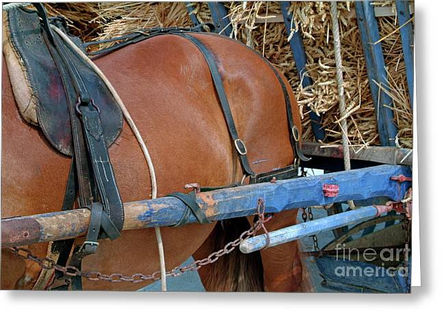 Horsedrawn Greeting Cards - Horse pulling a cart loaded with straw Greeting Card by Sami Sarkis