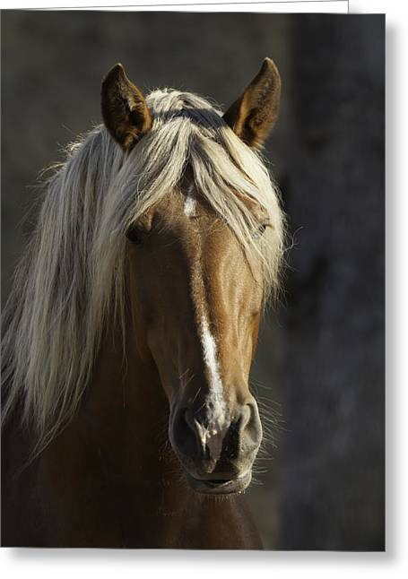 Duchess Greeting Cards - Horse Greeting Card by Robert Brownell