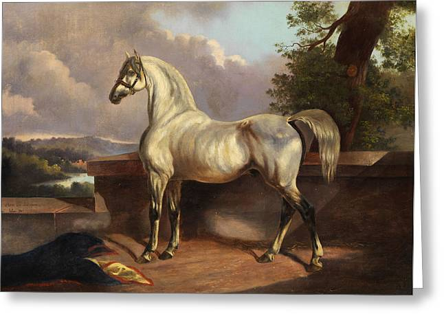 Horse Greeting Card by Rudolph Swoboda