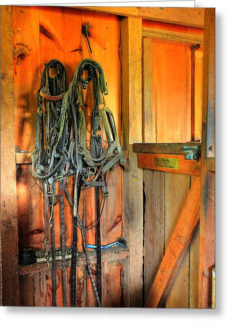 Breastplate Greeting Cards - Horse Tack Greeting Card by Paul Ward