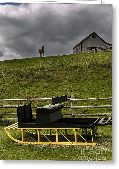 Rural Snow Scenes Greeting Cards - Horse Watching the Carriage Greeting Card by Darcy Michaelchuk
