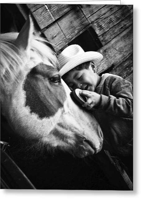 Country Side Greeting Cards - Horse Whisperer Greeting Card by Roxanne Weber