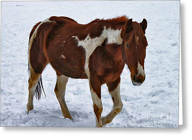 Horses With Nature Greeting Cards - Horse With No Name Greeting Card by Jutta Maria Pusl