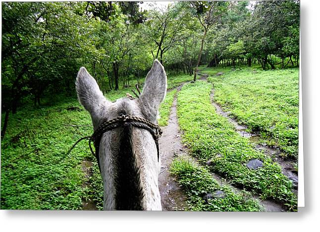 Rincon Greeting Cards - Horseback in Costa Rican Rainforest Greeting Card by Thuy Vi Gates