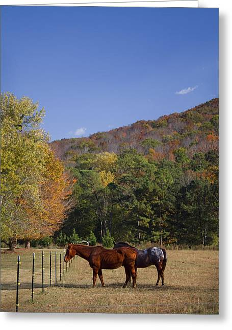 Horses And Autumn Landscape Greeting Card by Kathy Clark