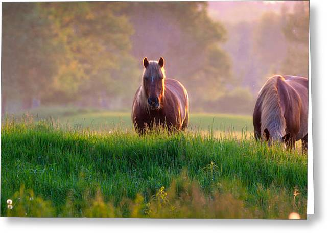 Field. Cloud Greeting Cards - Horses at sunset  Greeting Card by Emmanuel Panagiotakis