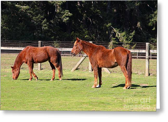 Marin County Greeting Cards - Horses At The Ranch . 7D9774 Greeting Card by Wingsdomain Art and Photography
