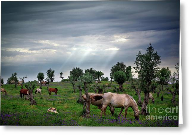 Eat Free Greeting Cards - Horses Eating Greeting Card by Carlos Caetano
