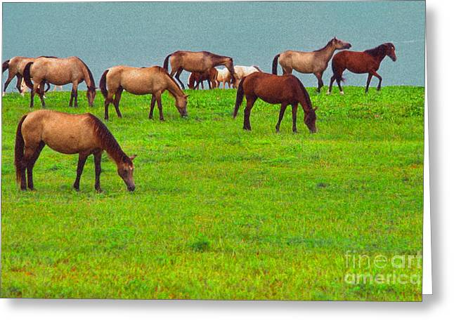 Paso Fino Greeting Cards - Horses Graze by Seaside Greeting Card by Thomas R Fletcher