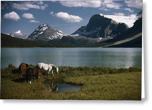 Grazing Snow Greeting Cards - Horses Graze In A Lakeside Meadow Greeting Card by Walter Meayers Edwards